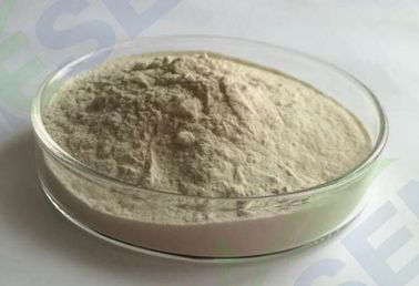 China Raw Powdered Bread Improver Enzyme  Suitable Temperature Range  Highly Concentrated factory